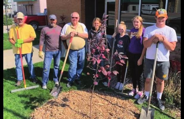Community groups plant trees