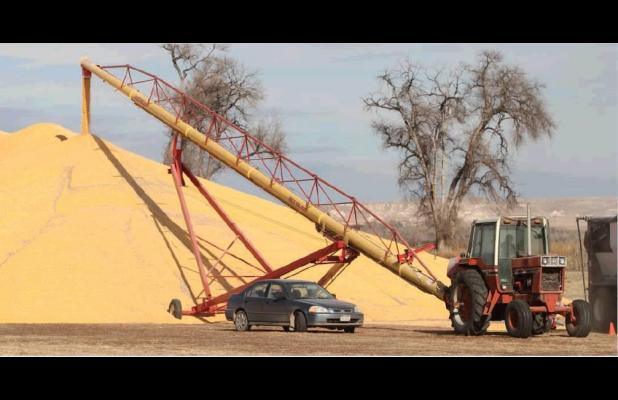 Corn harvest in full swing