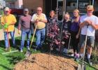 Community groups plant trees